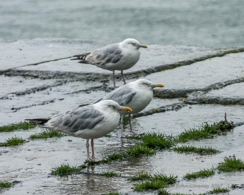 03-Bulloch-Harbour-20080816-©-John-Coveney